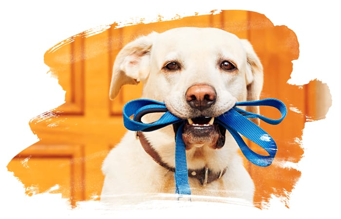Dog Walking Services In Hudson County