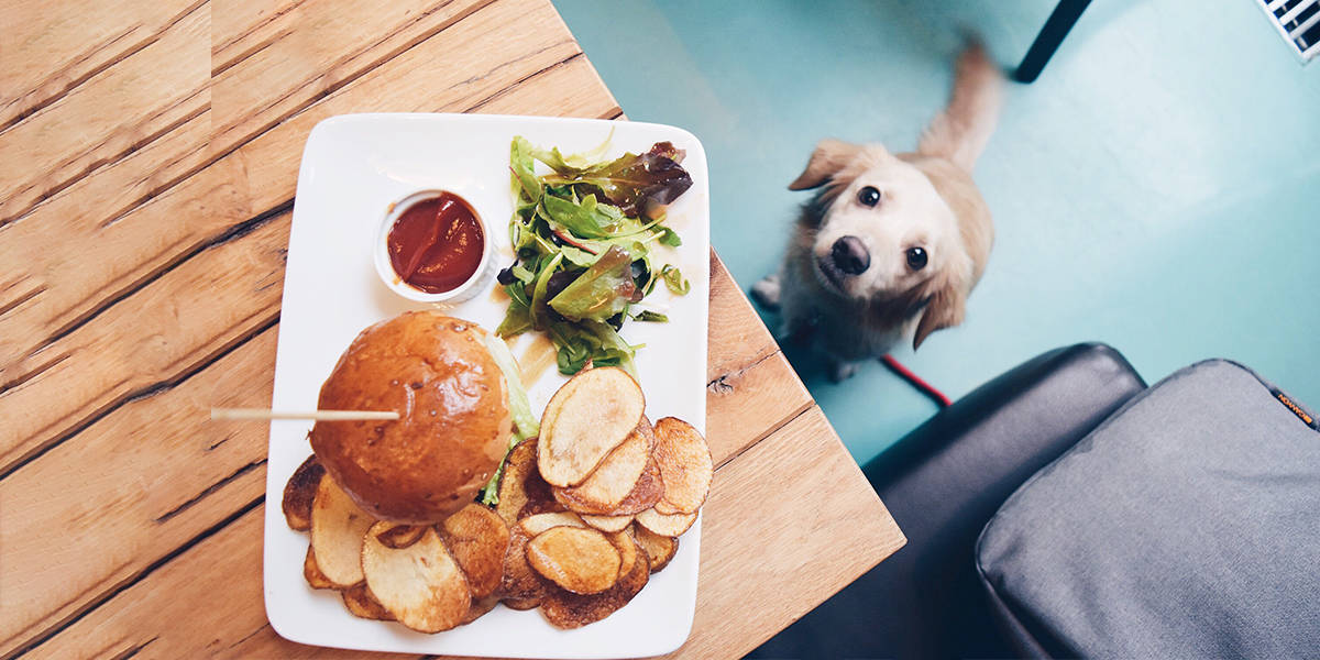 5 Tips To Tackle Dog Obesity And Prevent Your Pup From Becoming Fat